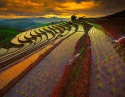 دیجی برنج